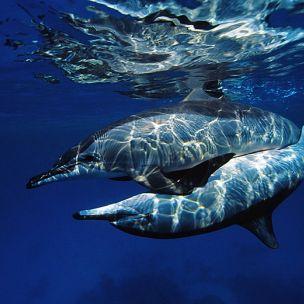 Delfinszerelem